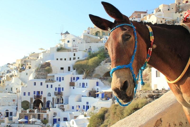 donkey-aw